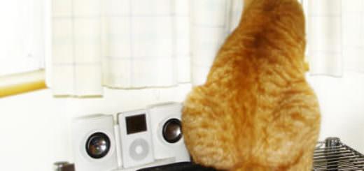 肉呆橘子貓的背影