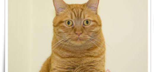 肉呆橘子貓
