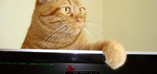 肉呆橘子貓在螢幕後面