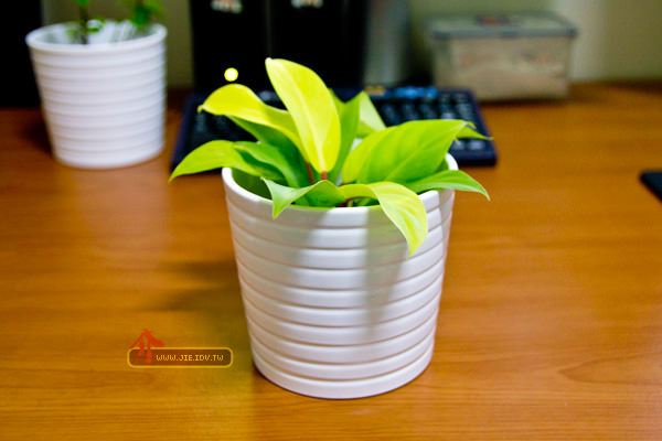 IKEA_Flowerpot