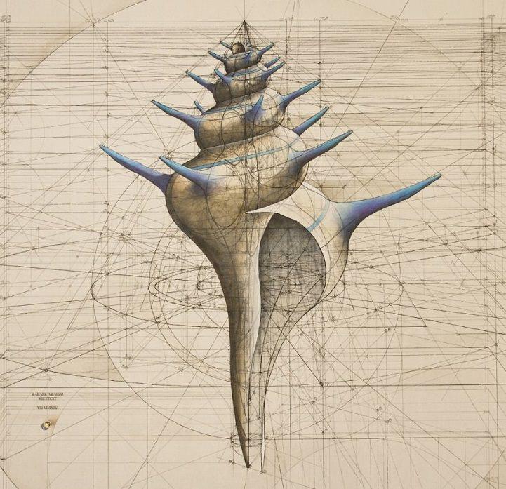 海螺黃金比例圖解說