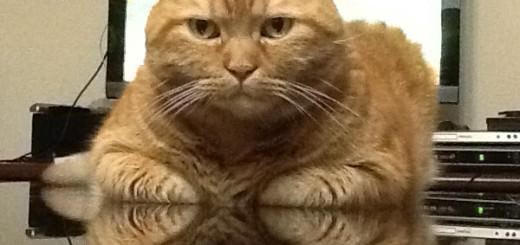 貓老大的氣勢